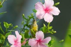 Встречайте меня на цветении Стоковая Фотография RF