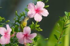 Встречайте меня на цветении Стоковые Изображения