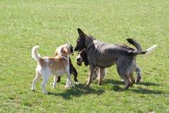 встречать собак стоковое изображение