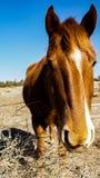 Встреча лошади Стоковые Изображения