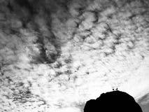 Встреча птицы в облаках стоковые изображения rf