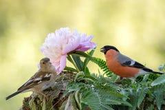 Встреча цветка Стоковое Изображение