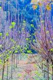 Всходы дерева шелковицы саженц-зеленые Стоковая Фотография RF