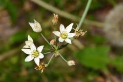 Всход макроса расти цветков в моем саде, свой крупный план снял стоковые изображения