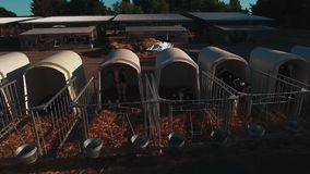 Всход трутня ферма сверху видеоматериал