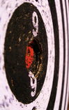 всход Стоковая Фотография