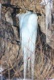 Всход зимы стоковые изображения rf