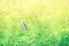 Всход макроса бабочки на желтом цветке с blured предпосылкой Стоковая Фотография RF