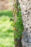 всходы зеленого цвета Стоковые Фото