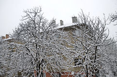 Вся белизна под снегом, ландшафт зимы на деревьях покрытых с сильным снегопадом Стоковая Фотография RF