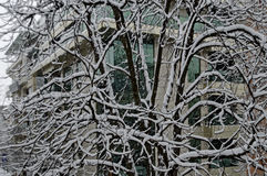 Вся белизна под снегом, ландшафт зимы на деревьях покрытых с сильным снегопадом Стоковое Фото