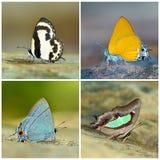 вся легкая бабочки отрезанная собранием изолированная к Стоковые Изображения RF