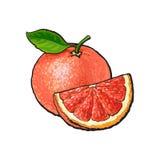 Вся и квартальная часть unpeeled зрелого розового грейпфрута бесплатная иллюстрация