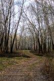 Вся природа как раз просыпает вверх и не все деревья имеют пока цвести листья стоковые фото