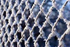 вся сеть hoarfrost сверх стоковая фотография rf