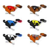 Вся собака basenji цвета бежать в платье гонок собаки Стоковые Фото