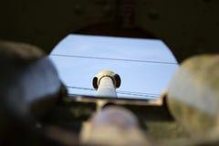 Вторая Мировая Война оружия Стоковое фото RF