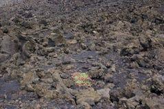 Вулкан Этна, Италия стоковые фото
