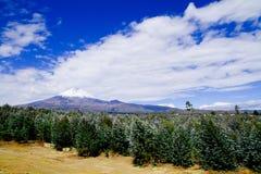 Вулкан Cotopaxi, эквадор Стоковые Изображения RF