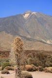 вулкан teide Стоковые Фото