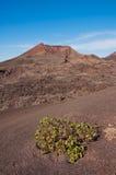 Вулканический ландшафт в Лансароте Стоковая Фотография RF