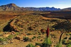 Вулканический ландшафт национального парка вулкана Teide Стоковое Изображение