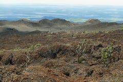 Вулканический ландшафт, Сьерра Negra, Галапагос Стоковые Фото