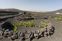 Вулканический виноградник Стоковое Фото