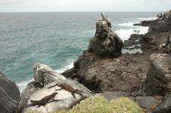 Вулканическое побережье Галапагос. Стоковая Фотография
