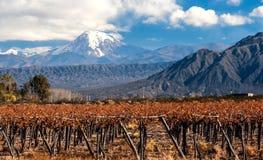 Вулкан Аконкагуа и виноградник, Аргентина Стоковая Фотография RF