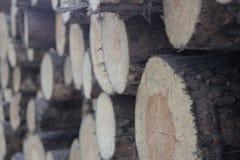 Входит в систему лес стоковая фотография rf