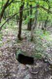 Вход к пещере спрятанной в древесинах стоковые фотографии rf