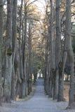 Вход парка города с деревьями осени стоковая фотография