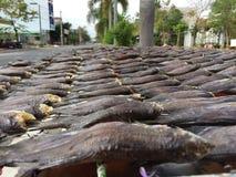 Въетнамская кухня: морепродукты - высушенная рыба Стоковые Фотографии RF