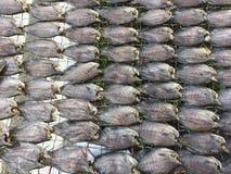 Въетнамская кухня: морепродукты - высушенная рыба Стоковые Фото