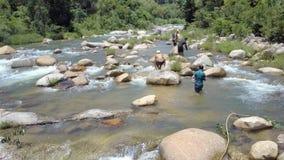 Въетнамские рыбы задвижки парней с руками в прозрачной речной воде акции видеоматериалы