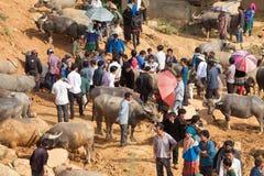 Въетнамский продавать фермеров и покупать индийский буйвола Стоковые Фотографии RF