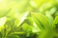 выберите лист фокуса зеленые на предпосылке нерезкости Стоковое фото RF