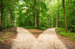 Выберите путь в зеленом landscapce леса стоковые изображения