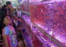 Выберите рыб стоковые изображения