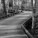 Выберите узкий путь Стоковая Фотография RF