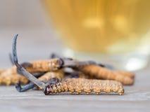 Выберите фокус cordyceps CHONG CAO гриба это травы С стеклом воды, добавьте воду от sinensis Ophiocordyceps стоковое изображение