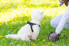 Выбирать вверх корму собаки Стоковые Изображения