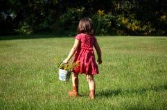 выбирать цветков Стоковое Фото