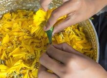 выбирать цветков Стоковая Фотография