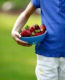 выбирать ягод Стоковая Фотография