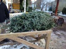 Выбирающ вне рождественскую елку для того чтобы принять домой Стоковые Изображения