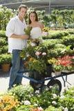 выбирающ пар цветет potted детеныши Стоковые Фото