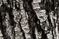 Выбитая текстура коричневой расшивы дерева с зеленым мхом и Стоковые Фото