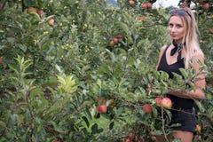 Выбор-ваш-собственные яблоки Стоковые Изображения RF